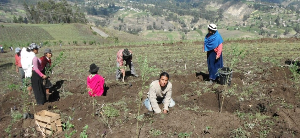 Pato planting trees crop