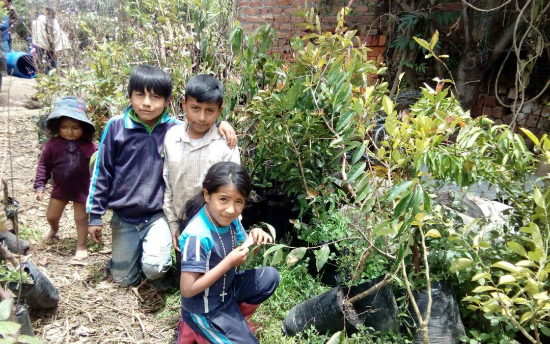 REGENERATIVE FARM AND FOOD FOREST, ECUADOR